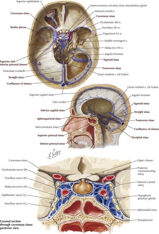 Vistoso Dural Venous Sinuses Anatomy Festooning Anatoma De Las