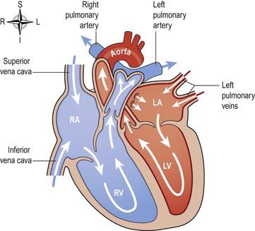The cardiovascular system | Basicmedical Key