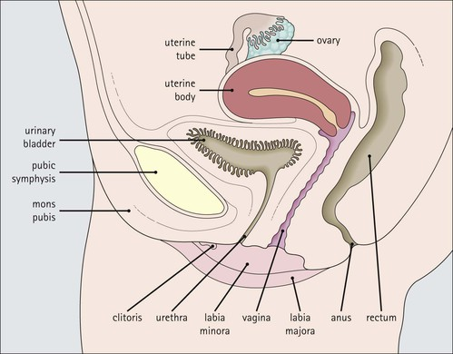 Angle of the vagina