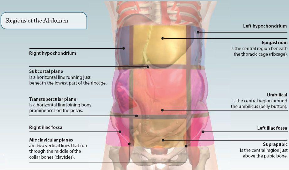 5: THE ABDOMEN | Basicmedical Key