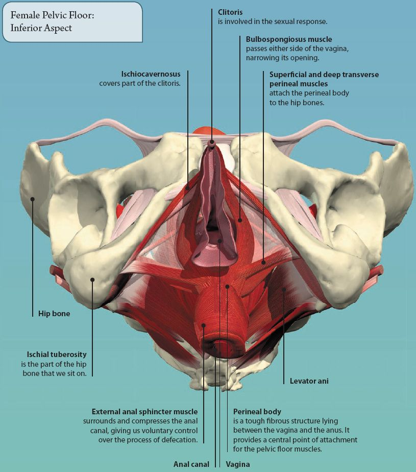 6: THE PELVIS | Basicmedical Key