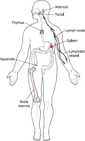 the human body  structure and function