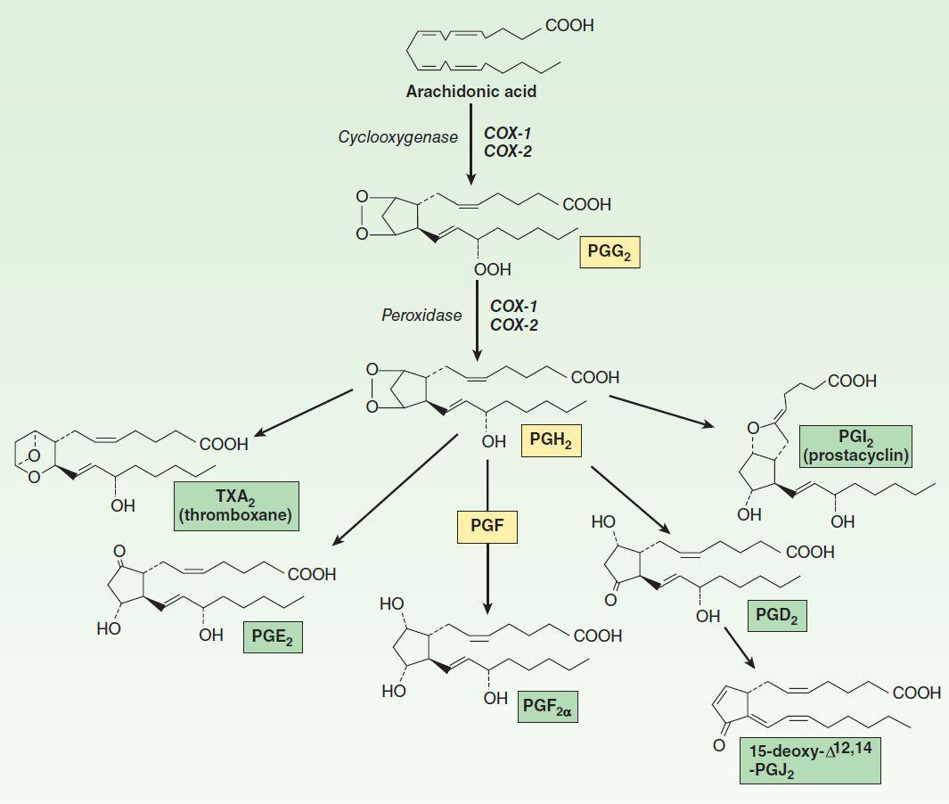 The Eicosanoids: Prostaglandins, Thromboxanes, Leukotrienes