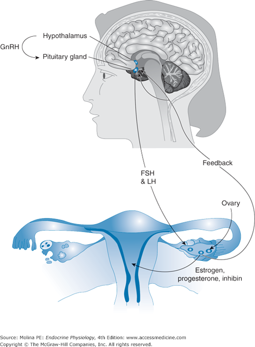 Anterior Pituitary Gland Basicmedical Key The four strictly tropic hormones are: anterior pituitary gland basicmedical key