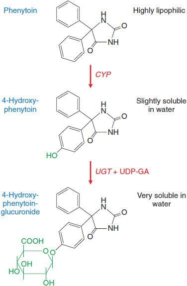 Characterization of Phase I Metabolism of …