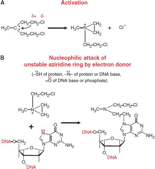 the general mechanisms actions of alkylating agents on dna are illustrated in figure 611 with mechlorethamine nitrogen mustard