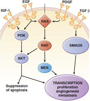inhibitors of the bcr abl kinase imatinib dasatinib and nilotinib