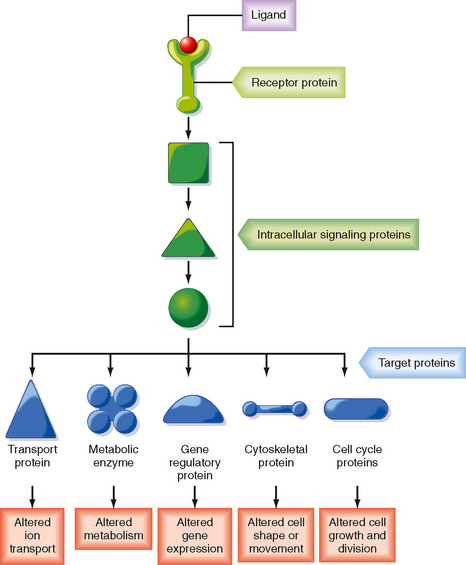 Signal Transduction, Membrane Receptors, Second Messengers