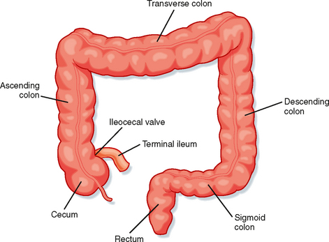 the colonic phase of the integrated response to a meal, Human Body