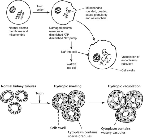 cell and tissue damage