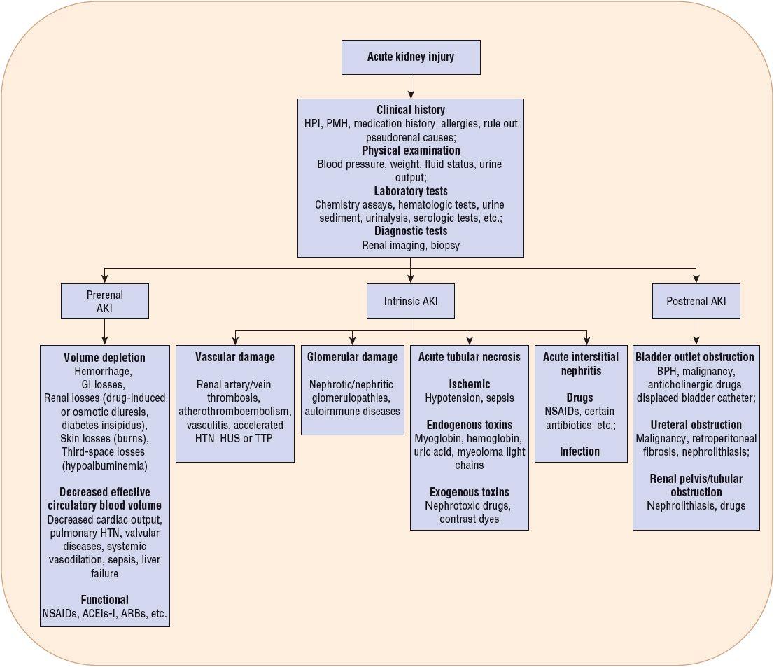 Acute Kidney Injury Basicmedical Key