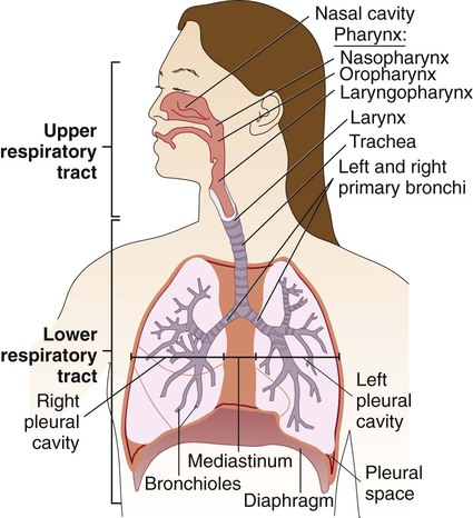 Infections Of The Lower Respiratory System Basicmedical Key