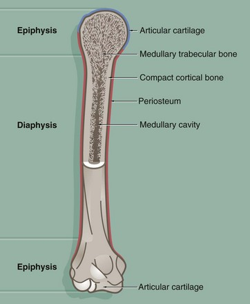 Lamellar bone diagram
