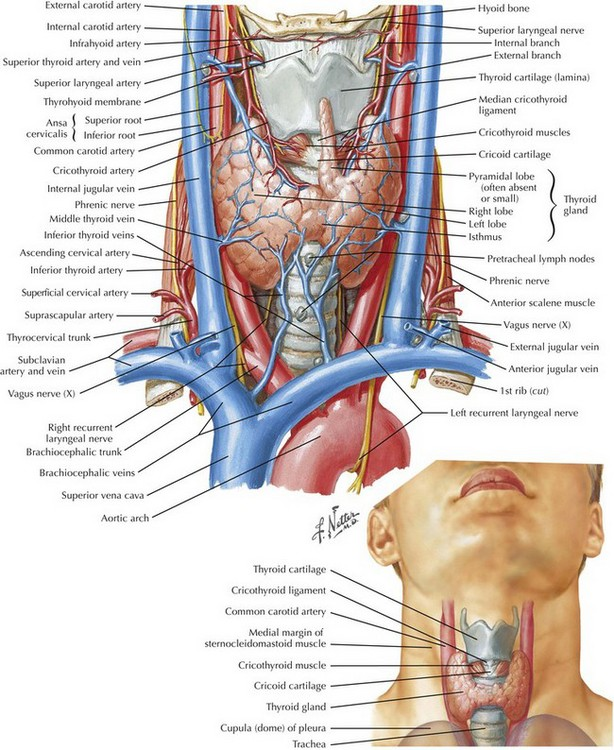 Thyroidectomy And Parathyroidectomy Basicmedical Key