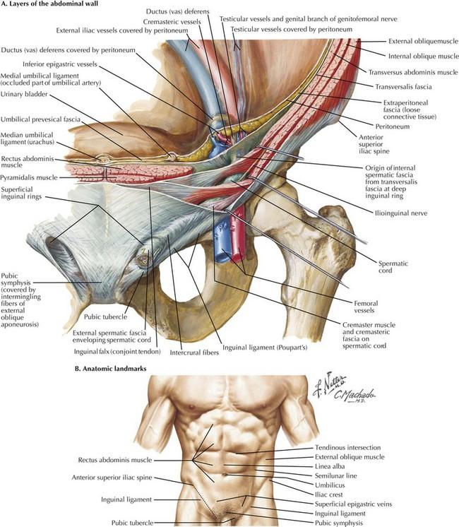 Direct hernia anatomy