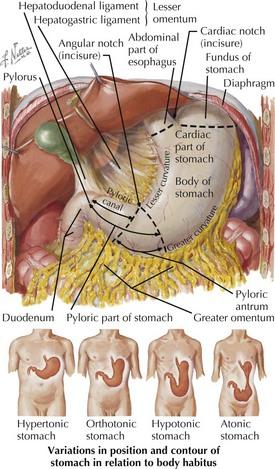 a duodenum neuroendokrin rákja