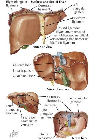 Liver Diseases Basicmedical Key