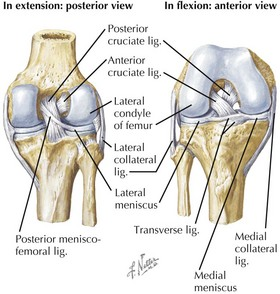 Knee and leg fractures basicmedical key knee joint ccuart Image collections