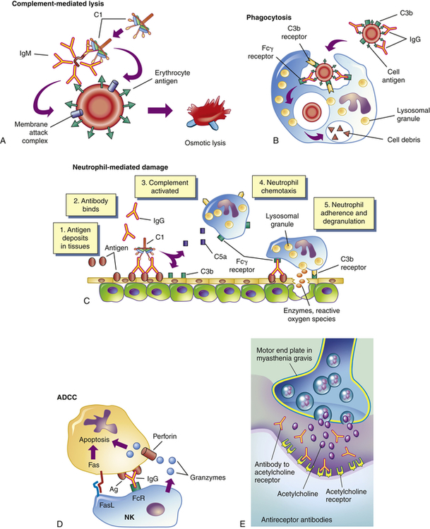 Alterations In Immunity And Inflammation