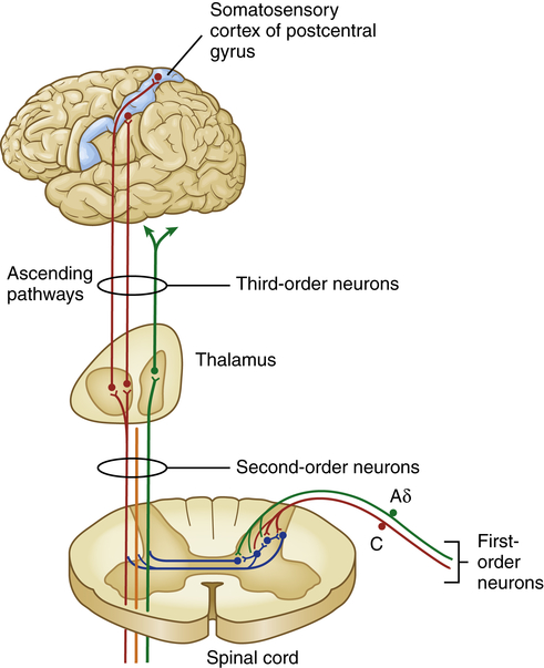 nociception and pain perception a literature The expansive body of literature in this area clearly  by a brief review of sex  differences in experimental measures of pain perception  shows that genotype  and sex interact to influence nociceptive sensitivity,67 and these.
