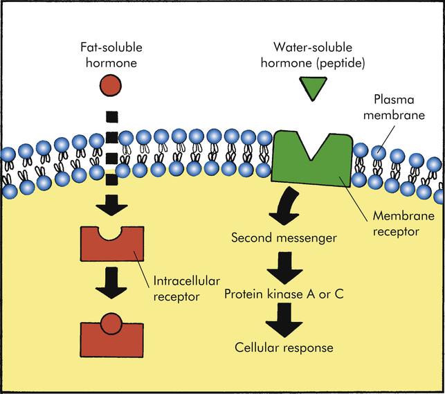 Mechanisms Of Hormonal Regulation