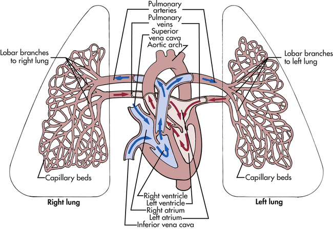 What Is The Difference Between Pulmonary Vein And Pulmonary Artery?