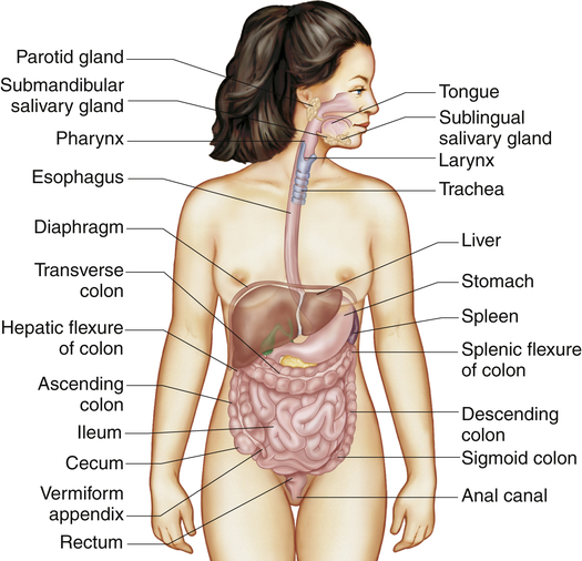 Structure And Function Of The Digestive System Basicmedical Key