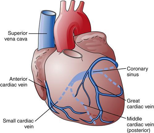 Cardiac Function Basicmedical Key