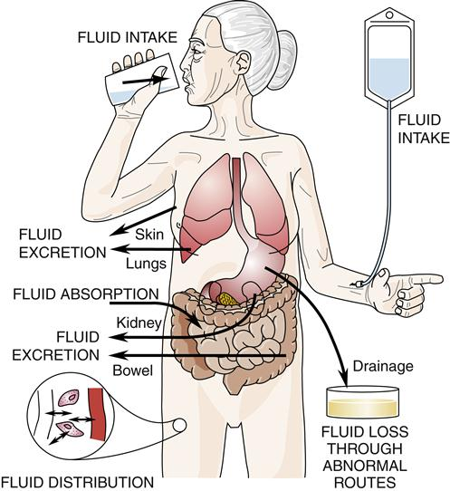 homeostasis imbalances Electrolyte homeostasis  water and electrolyte imbalances • the concentrations of electrolytes in body fluids must be maintained within specific limits,.