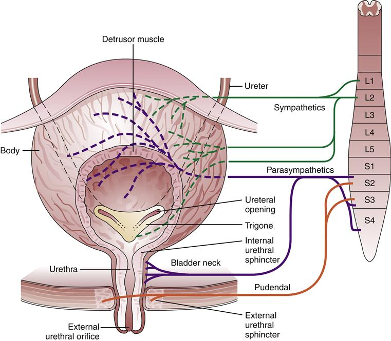 Disorders Of The Lower Urinary Tract
