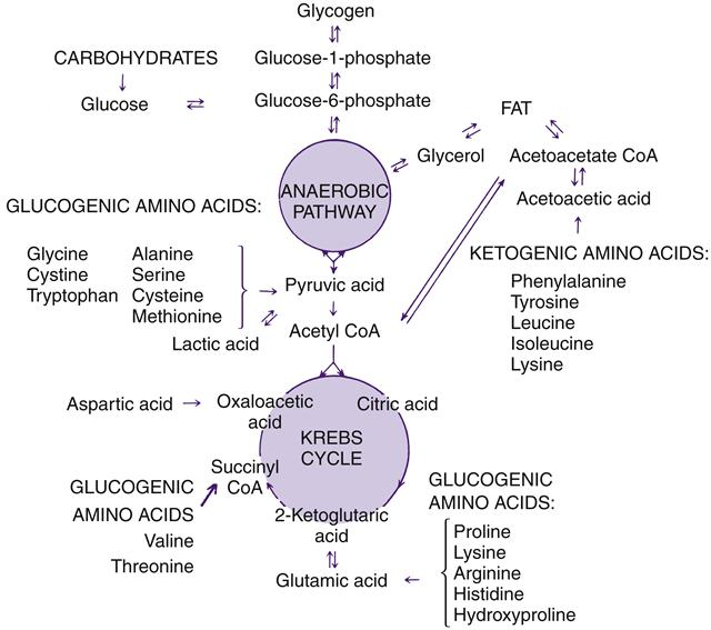 Anaerobic Metabolism: Alterations In Metabolism And Nutrition