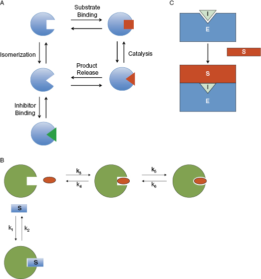 Example Site And Situation: 3: Reversible Modes Of Inhibitor Interactions With Enzymes