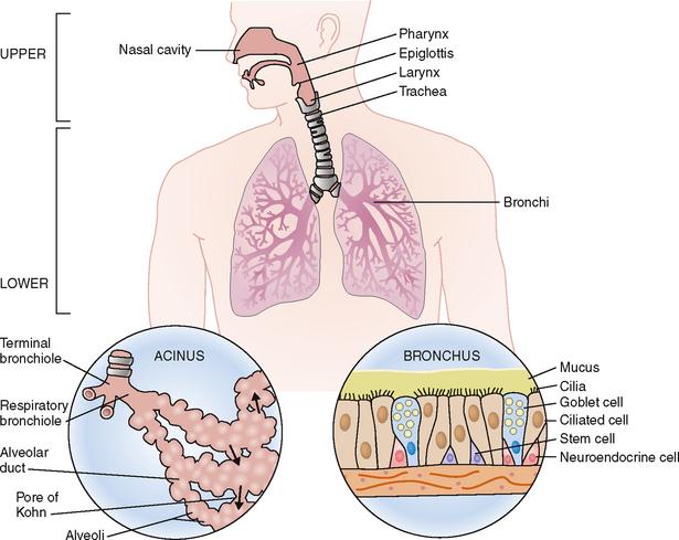 PULMONARY DISEASES | Basicmedical Key
