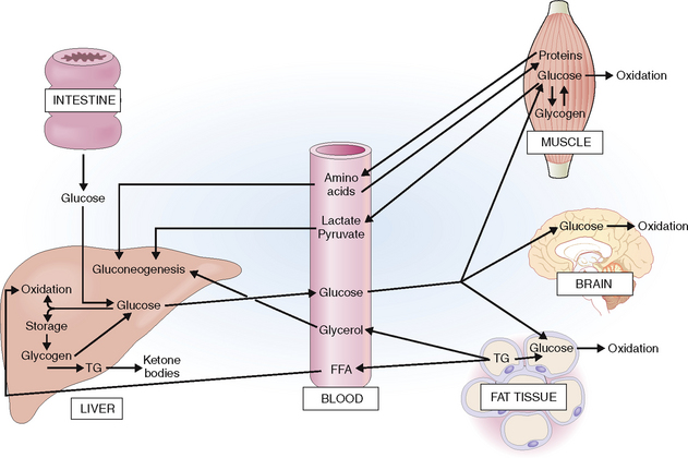 insulin to glucagon concentration ratio essay The influence of pregnancy on serum glucose, serum insulin, and plasma  glucagon concentrations was studied in eight normal women and 14 nonobese.