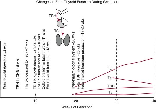 The Thyroid Pathophysiology And Thyroid Function Testing