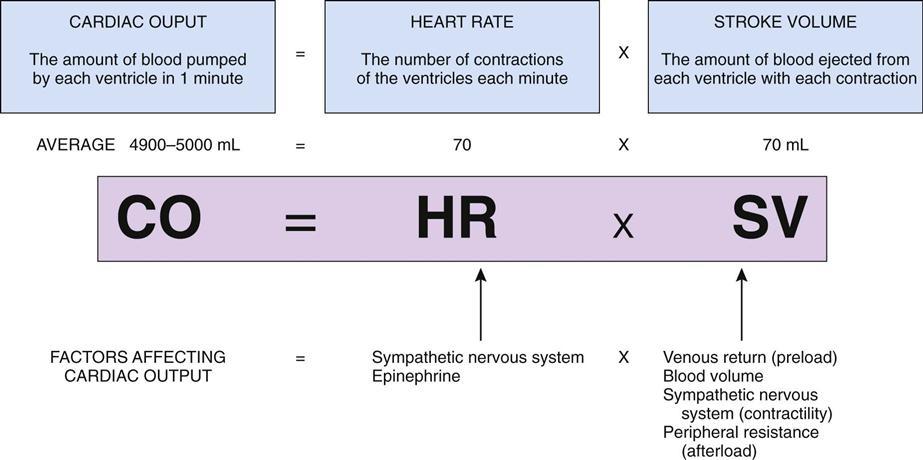 Cardiovascular System Disorders | Basicmedical Key
