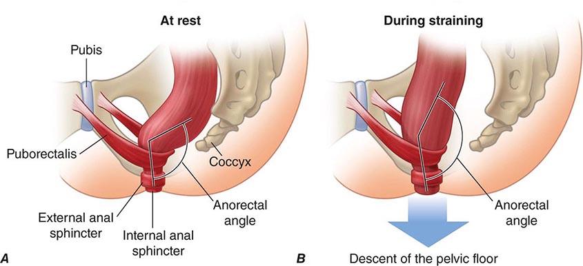 Spincter internal anus
