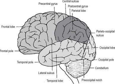 nervous system | basicmedical key, Human Body
