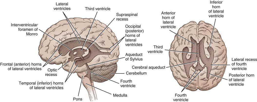 Neurosurgery basicmedical key figure 21 12 ventricular system showing its relationship to various parts of brain ccuart Choice Image