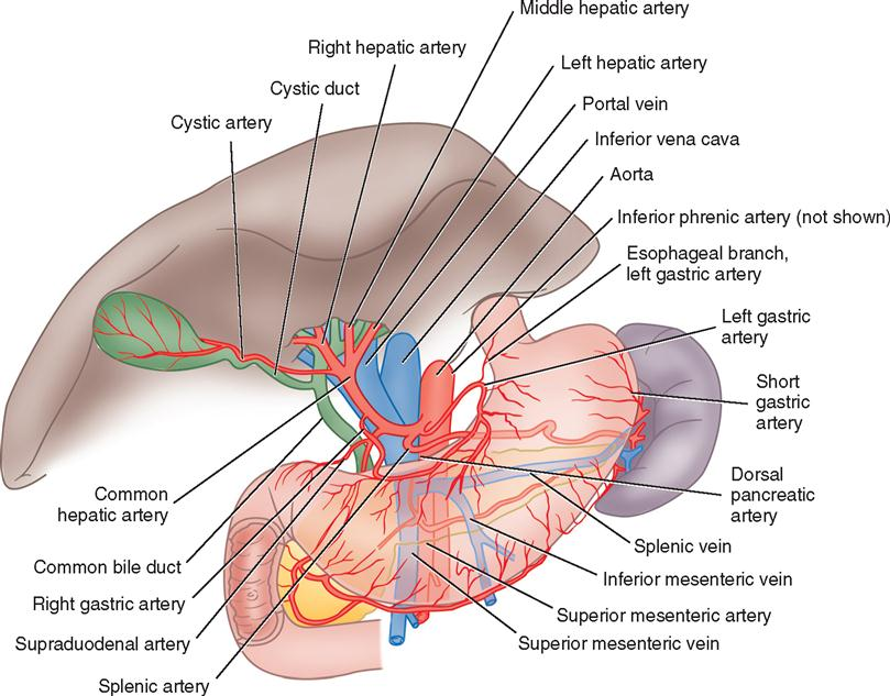 3 Surgery Of The Liver Biliary Tract Pancreas And Spleen