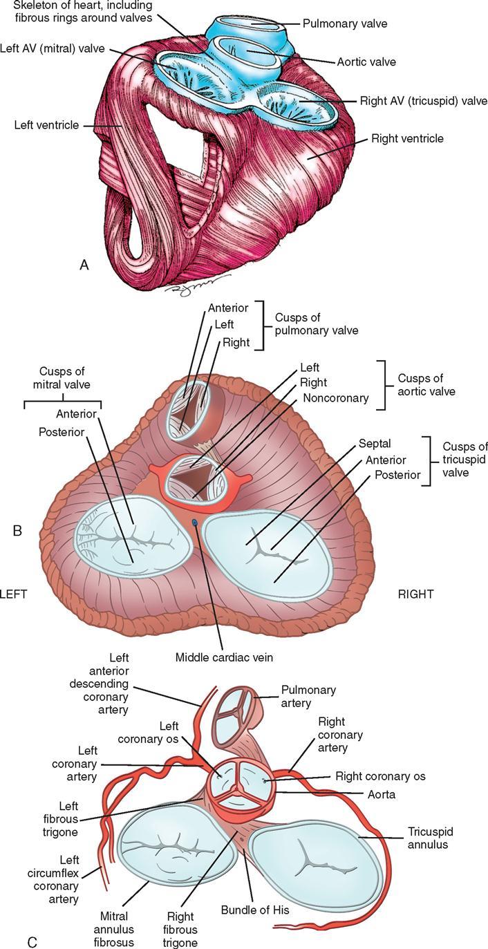 16. Cardiac Surgery | Basicmedical Key