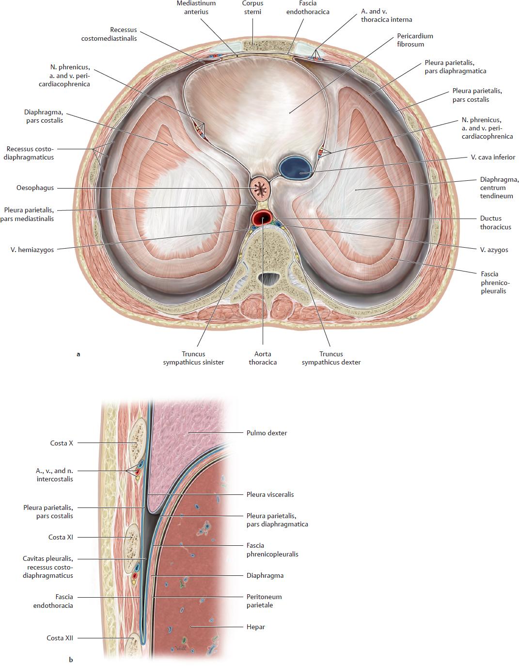 Groß Vertebralis Segmentale Anatomie Fotos - Anatomie Ideen ...
