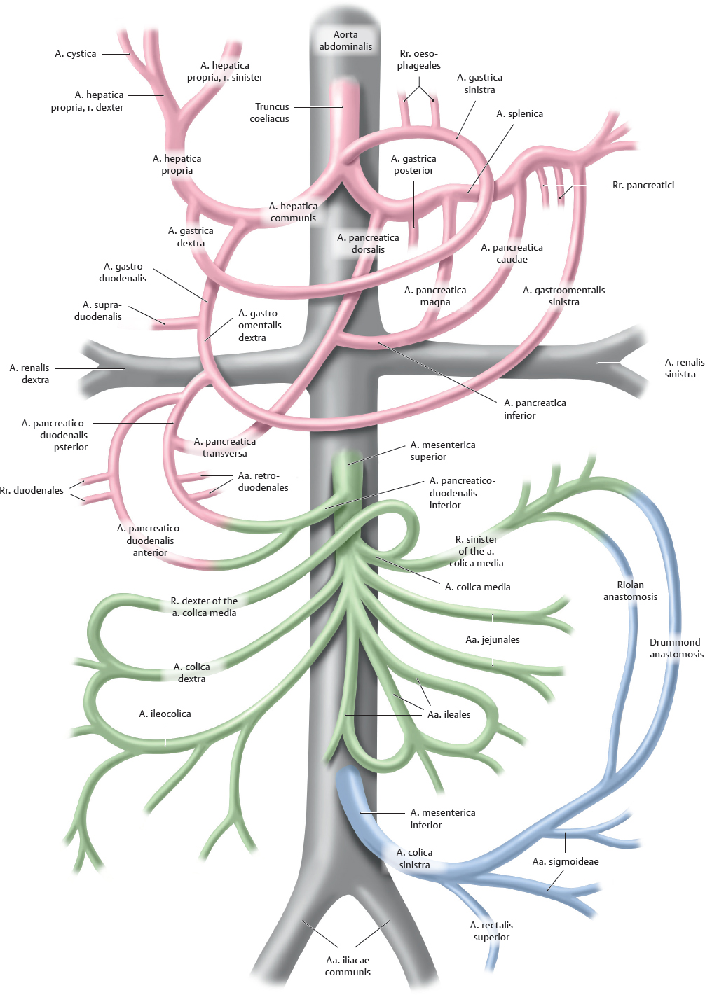Overview of Neurovascular Structures   Basicmedical Key
