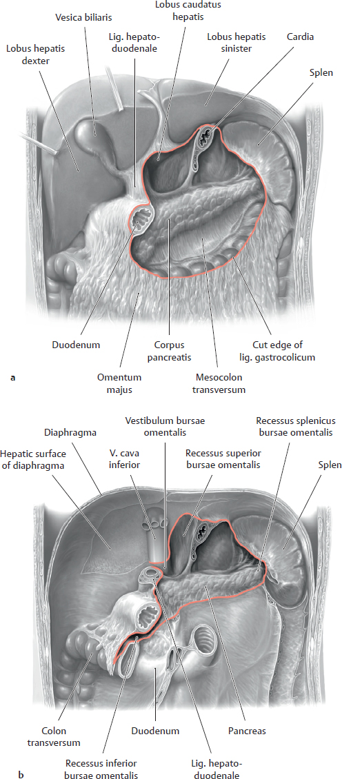 Topographical Anatomy | Basicmedical Key