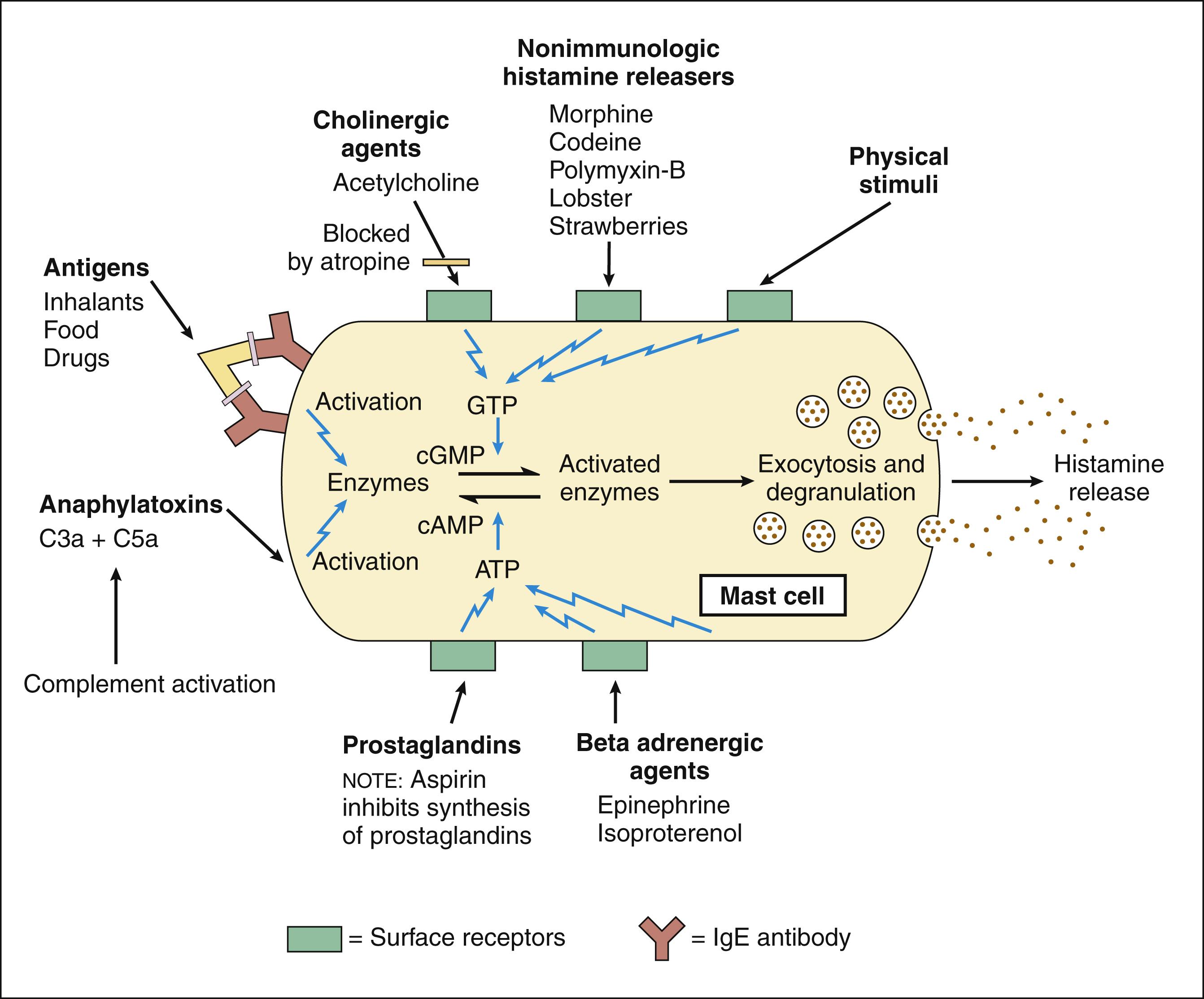Autacoid Drugs   Basicmedical Key