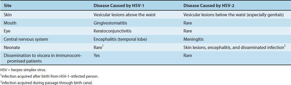 Dna Enveloped Viruses Basicmedical Key