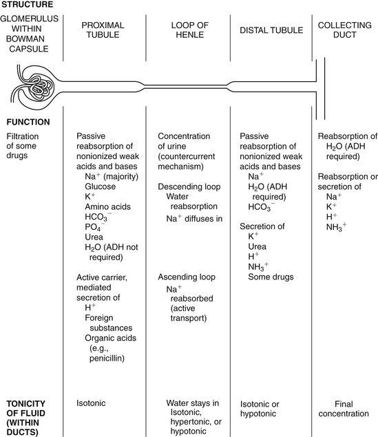 General Pharmacokinetic And Pharmacodynamic Principles