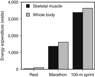 regulation of fuel utilization in response to physical activity, Muscles
