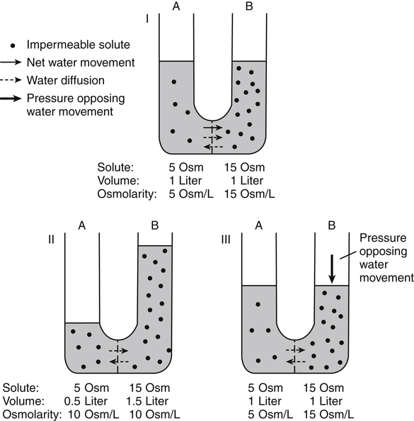 osmotic pressure worksheet  colligative properties of