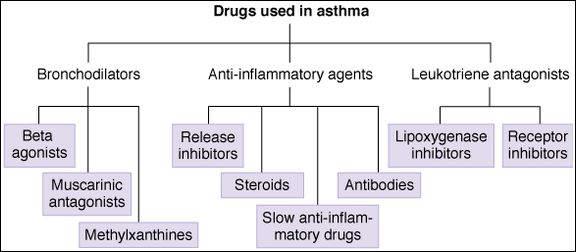 Bronchodilators & Other Drugs Used in Asthma | Basicmedical Key